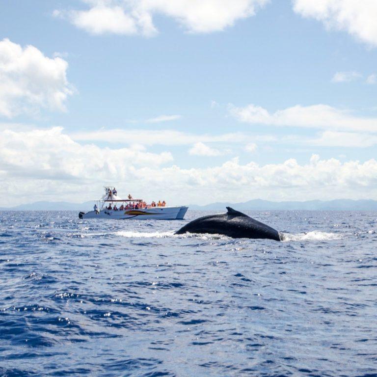 ballenas-jorobadas